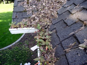 Dirty Gutters - Gutter Cleaning by The Lawn Boys